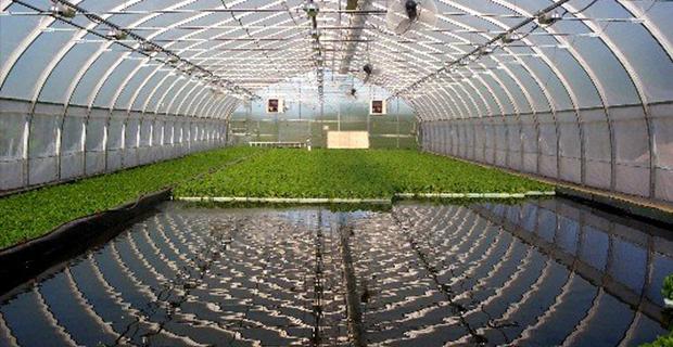 vertical-farm-metodi-f