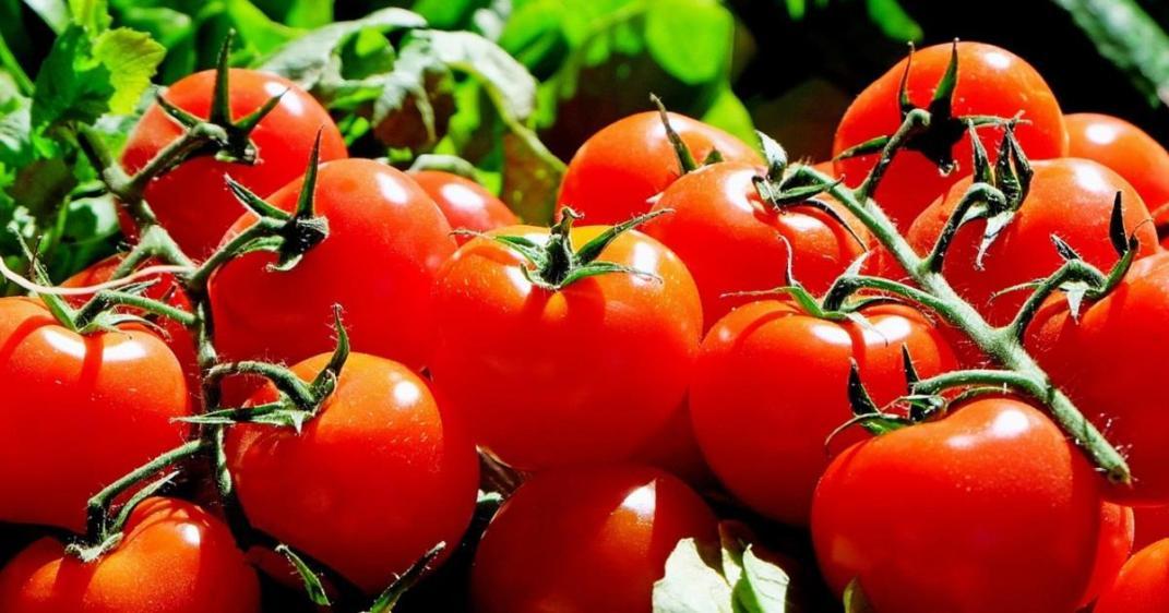 pomodori-allergia-al-nichel